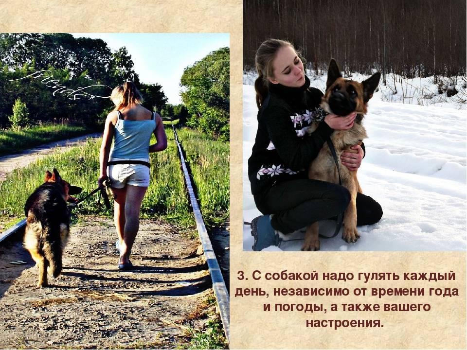 С какого возраста можно гулять со щенком на улице: окончание карантина и правила первой прогулки