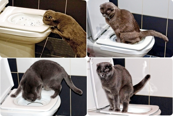 Как отучить кошку гадить где попало: мягкая коррекция поведения вместо физических наказаний