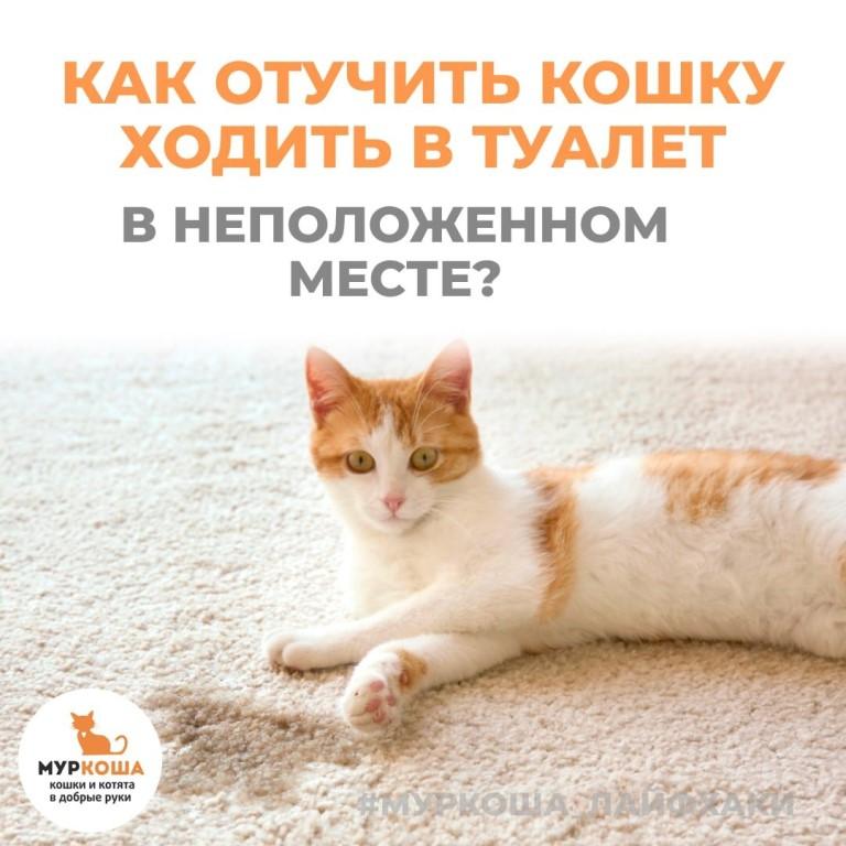 Чем отпугнуть кошек, чтобы не гадили в подъезде. средства, которые помогут отпугнуть кошек, чтобы не гадили - наши лапки