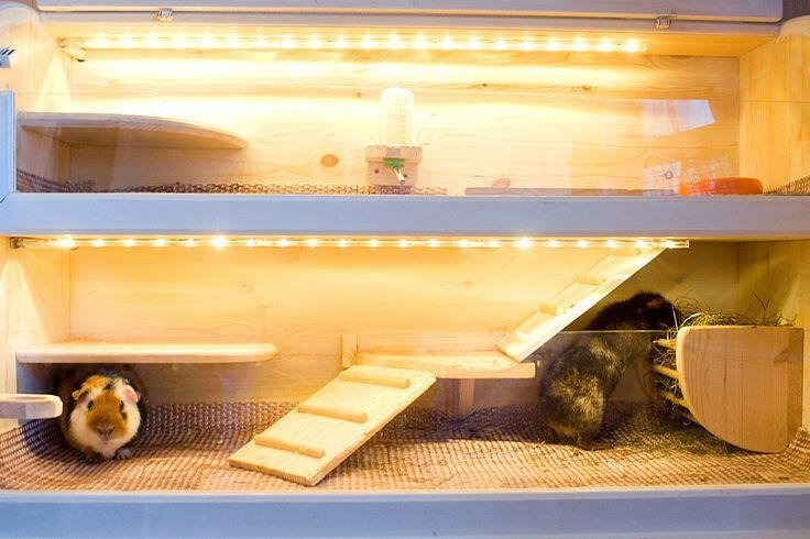 Пошаговая инструкция по изготовлению клетки для морской свинки своими руками