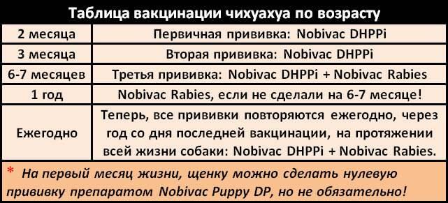 Первая прививка щенку + таблица прививок собакам по возрасту