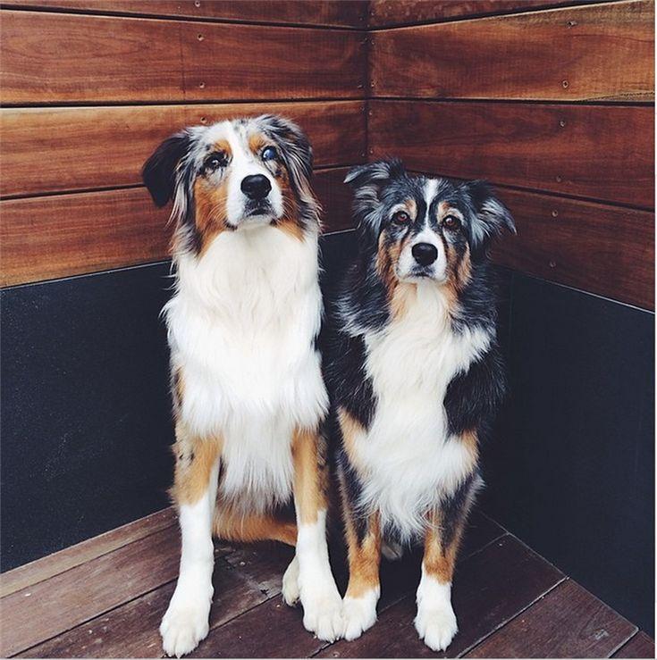Топ-10 наиболее долгоживущих пород собак с точки зрения специалиста - статьи
