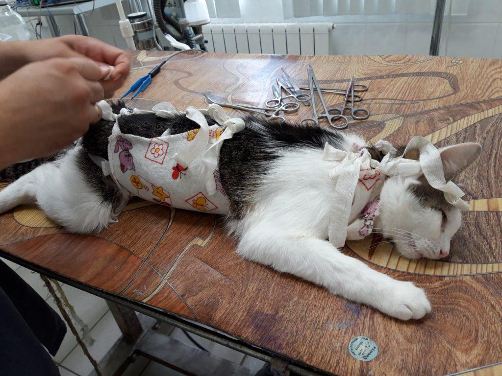 Можно ли обрабатывать беременную кошку от глистов: применение лекарств и других средств