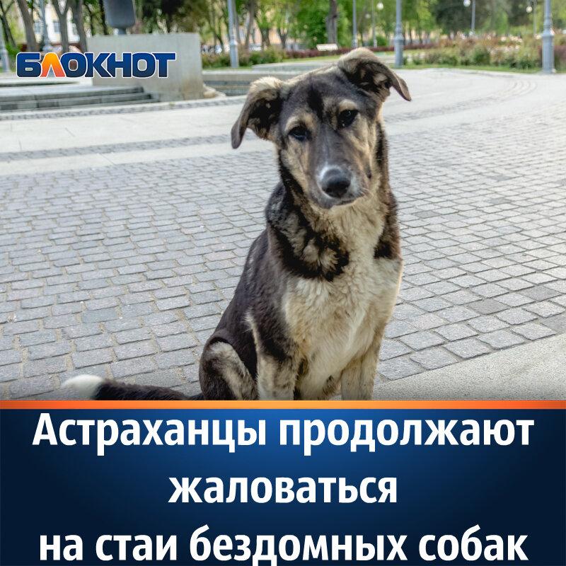 Куда обратиться чтобы стерилизовали бездомную собаку