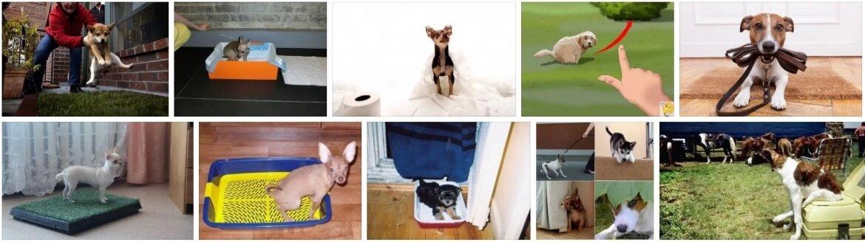 Как приучить щенка к туалету на улице: советы и рекомендации