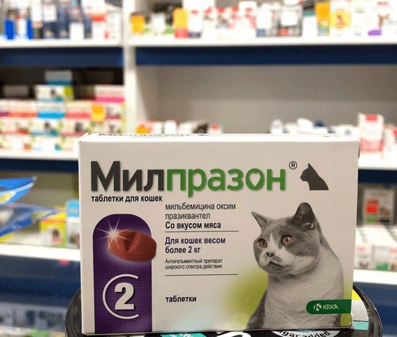 Лучшие препараты от глистов для кошек широкого спектра - kupipet.ru