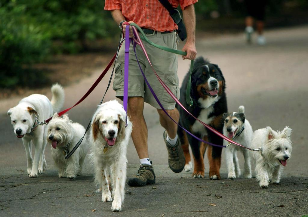 Сколько нужно гулять с собакой — раз в день и продолжительность прогулок
