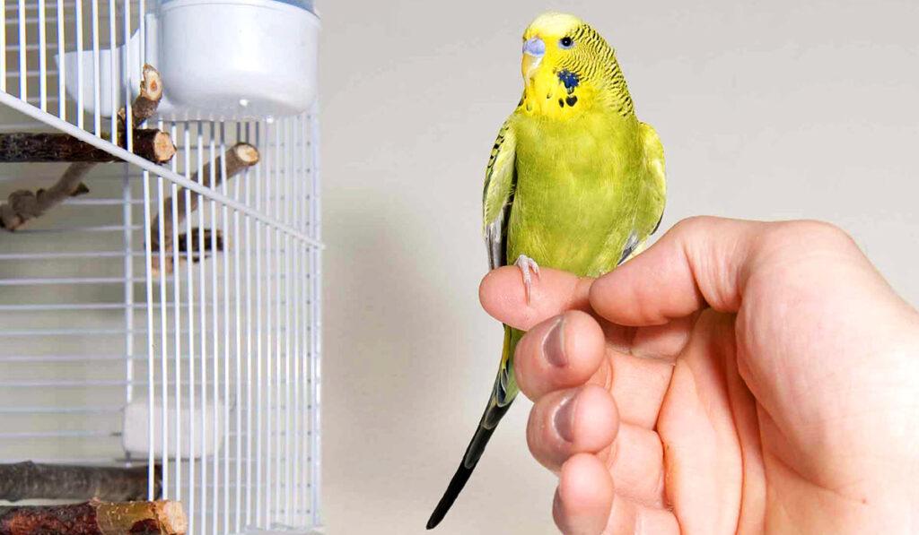 Как научить попугая ???? разговаривать: методики | pet7