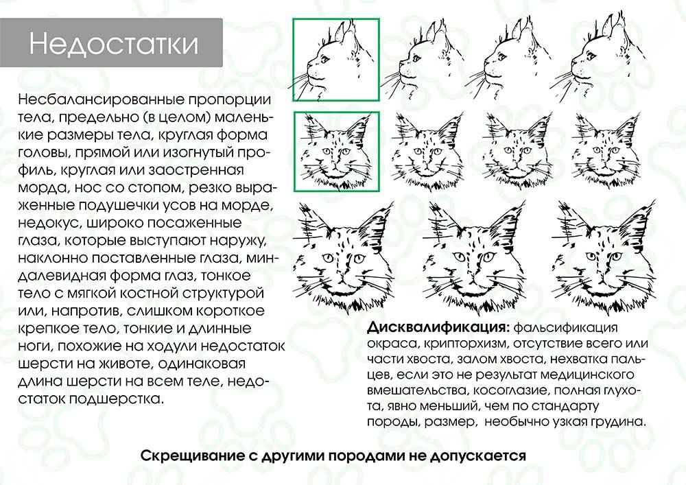 Как определить возраст котенка правильно по весу и зубам в домашних условиях - petstory
