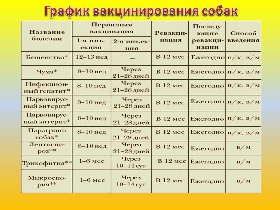 Прививки щенкам до года: таблица и график