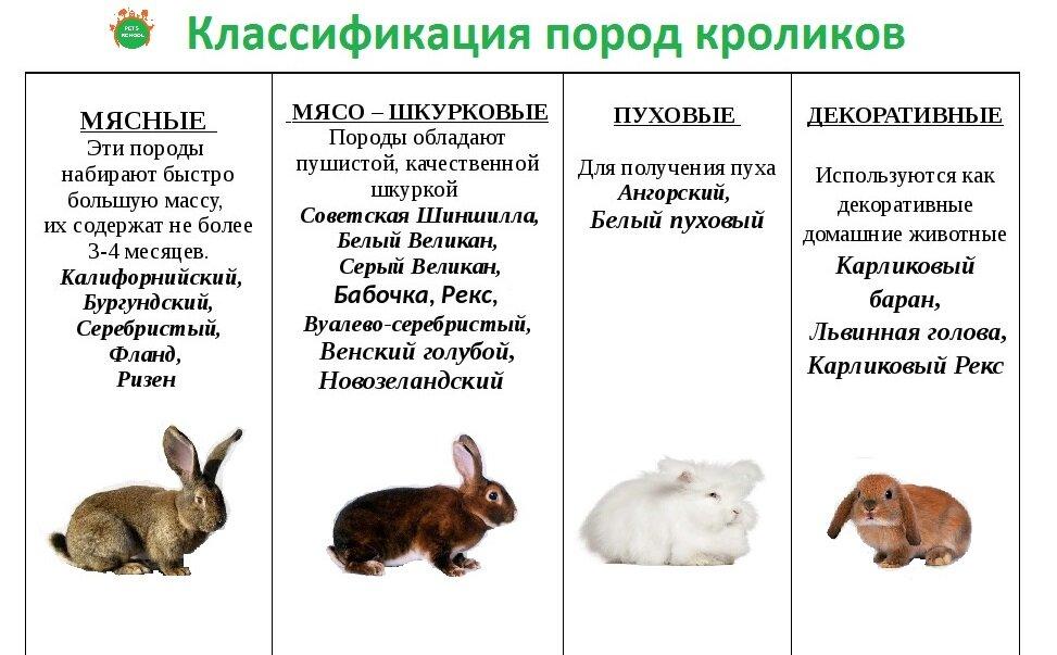 Сколько живут декоративные кролики?