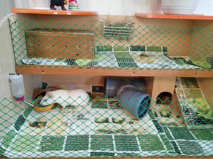 ᐉ как обустроить клетку для морской свинки - чем должен быть оборудован дом - zoopalitra-spb.ru