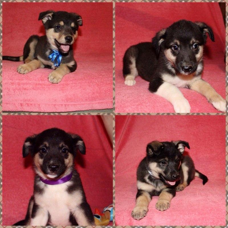 ᐉ 5 вариантов, как узнать породу собаки и щенка по внешнему виду - kcc-zoo.ru