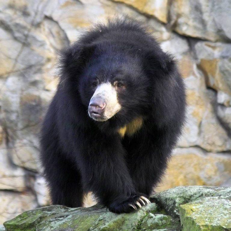 Виды медведей: ???????????????????? ????????????????  newsland – комментарии, дискуссии и обсуждения новости.