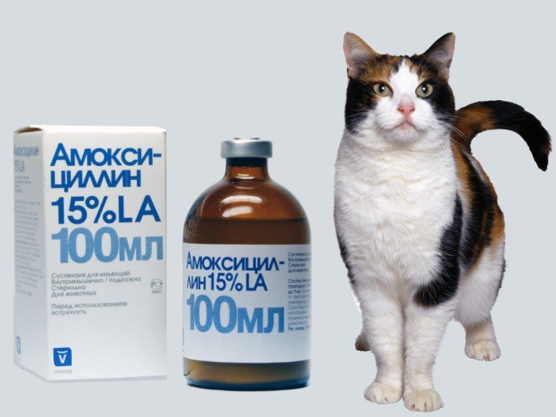 Насморк у кошек. лечение и другие симптомы.