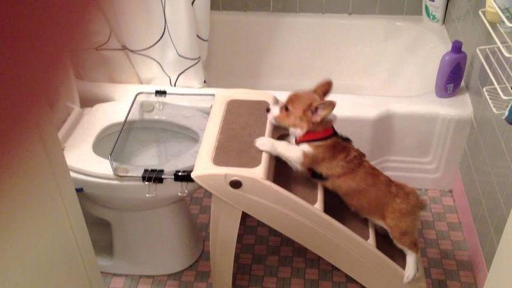 Как приучить щенка к туалету на улице: инструкция и рекомендации