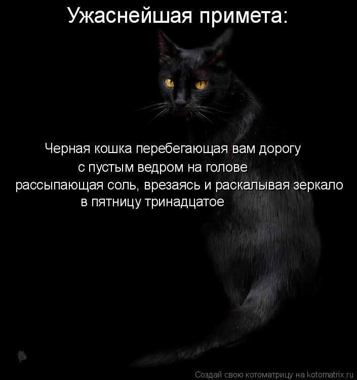 О чем говорят приметы если в дом или квартиру забежала чужая кошка или кот