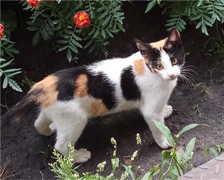 Что приносит трехцветная кошка своему хозяину: счастье или беду