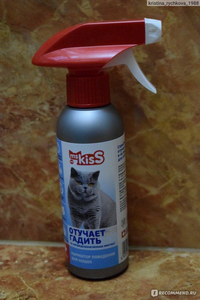 Как отвадить кошек с чердака дома