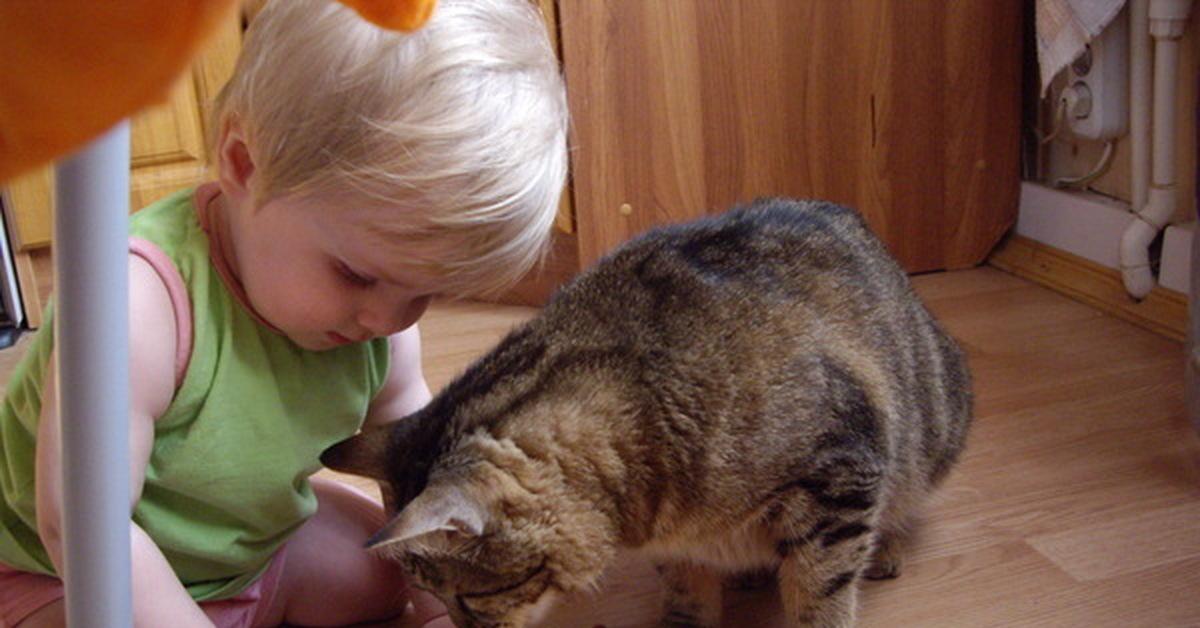Кошка ничего не ест, много пьет или не пьет, что делать