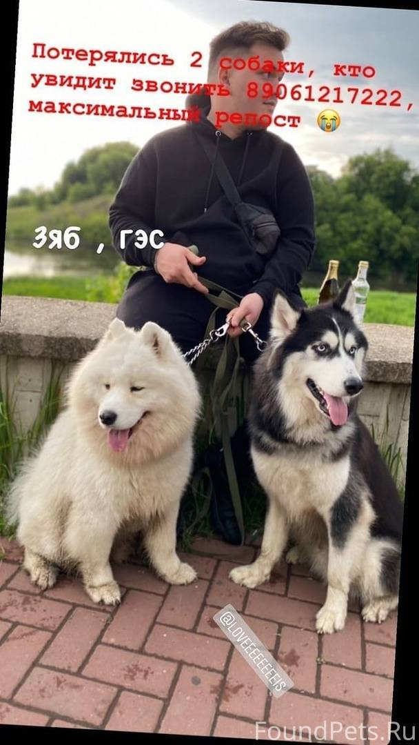 Какая порода собак у путина: фото и описание