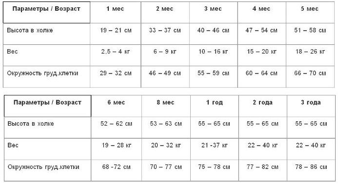 Размеры овчарок (27 фото): таблица веса и роста щенков по месяцам. сколько весит взрослая собака? ее рост в холке