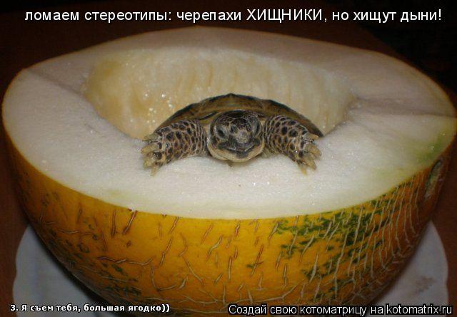 Чем кормить красноухую черепаху, что ест водная черепаха