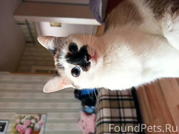 Трехцветная или трехшерстная кошка в доме – приметы и суеверия