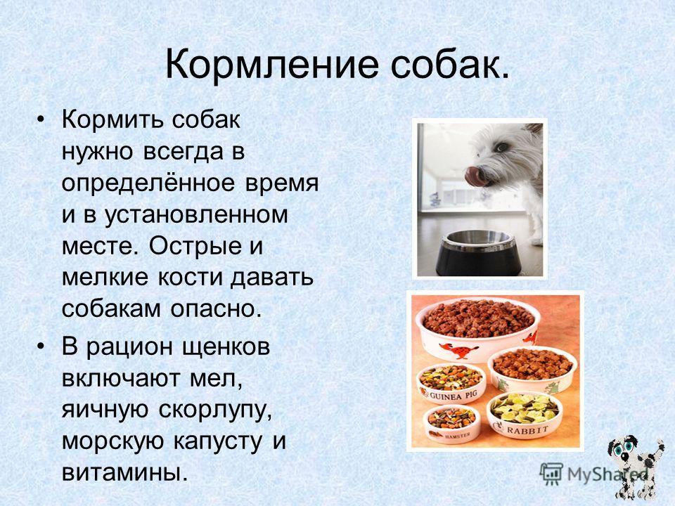 Как кормить собаку натуралкой меню