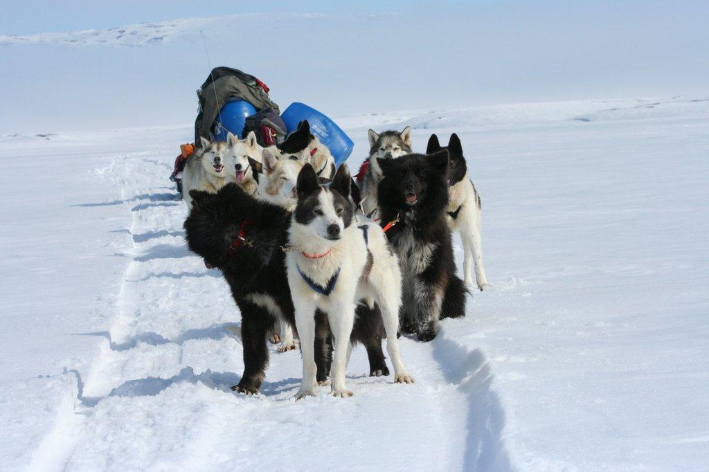 Все русские охотничьи породы собак фото — сайт эксперта по животным — howmeow