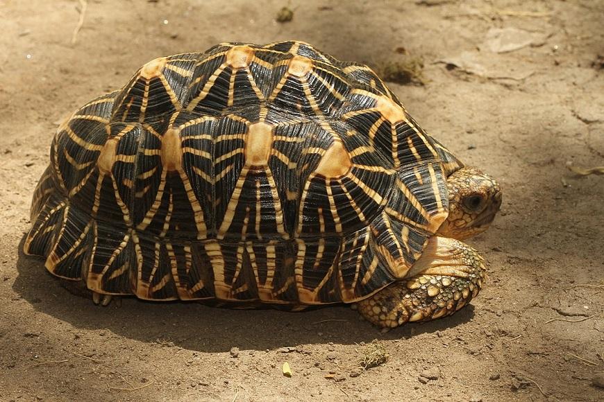 """Обзор видов домашних черепах   блог ветклиники """"беланта"""""""