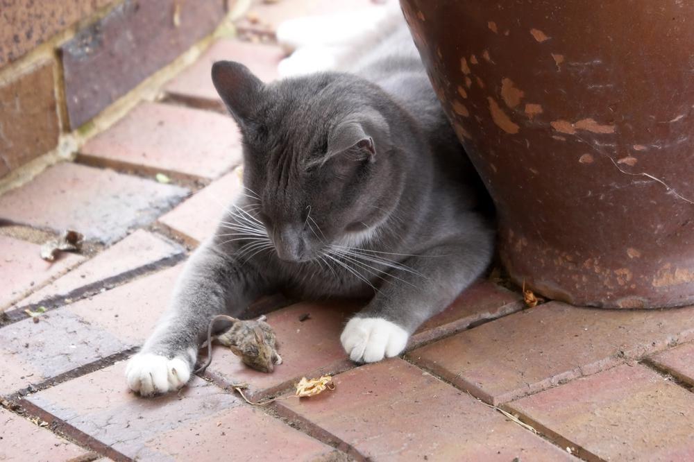 Почему кошка ложится на место, где спал хозяин, знают эксперты
