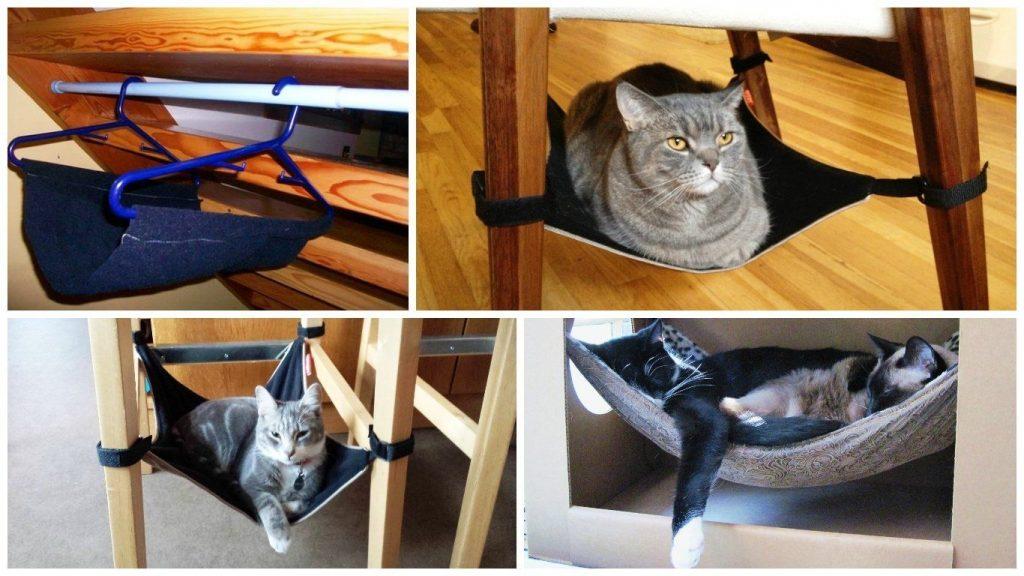 Что нужно сделать, чтобы кошка прожила максимально долго