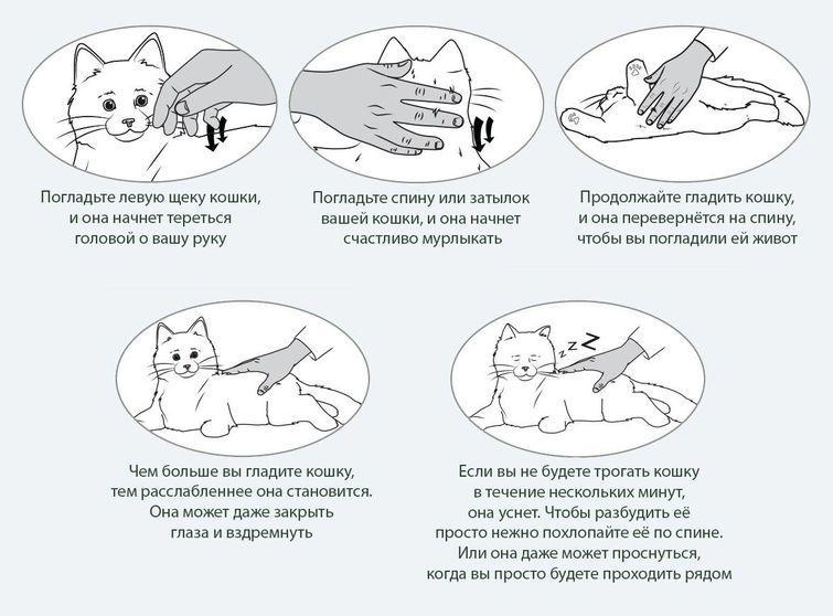 Погладь кота! / флудилка / блоги летающих домохозяек