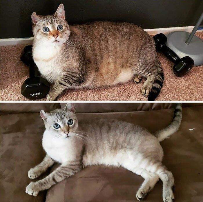 Почему кошка не ест? возможные причины и последствия. - лечение, основные причины и симптомы