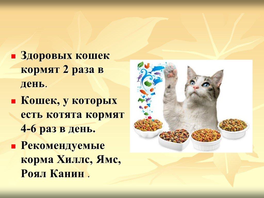Можно ли кошке сырое мясо: подробная инструкция, как правильно кормить кошку говядиной, свининой, курятиной