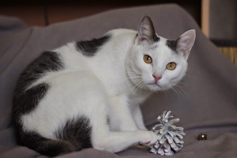 Породы белых кошек с фото и названиями: топ 20 разных вариантов