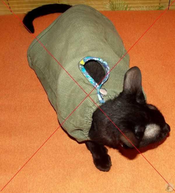 ᐉ как сделать попону для кошки из колготок – корсет для котенка - zoomanji.ru