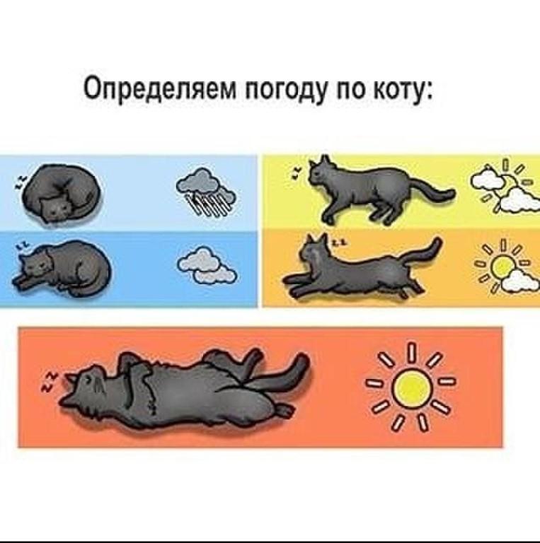 Кошка как синоптик: определяем погоду по поведению любимца