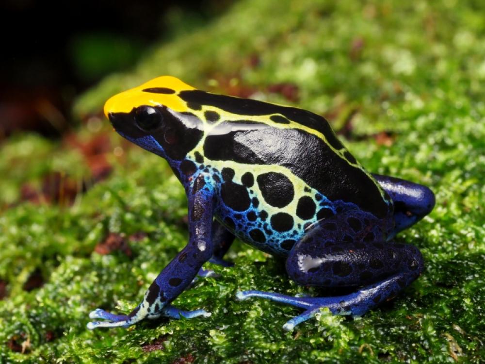 Виды лягушек. описание, особенности и названия видов лягушек   животный мир