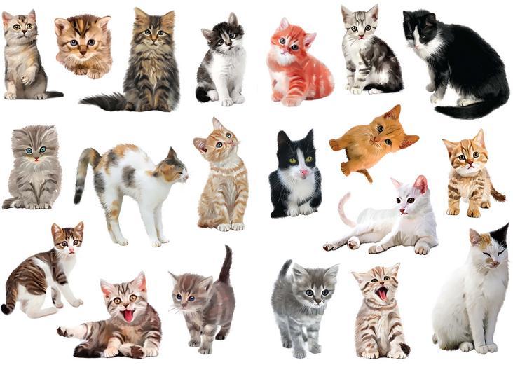 Как назвать рыжего котенка
