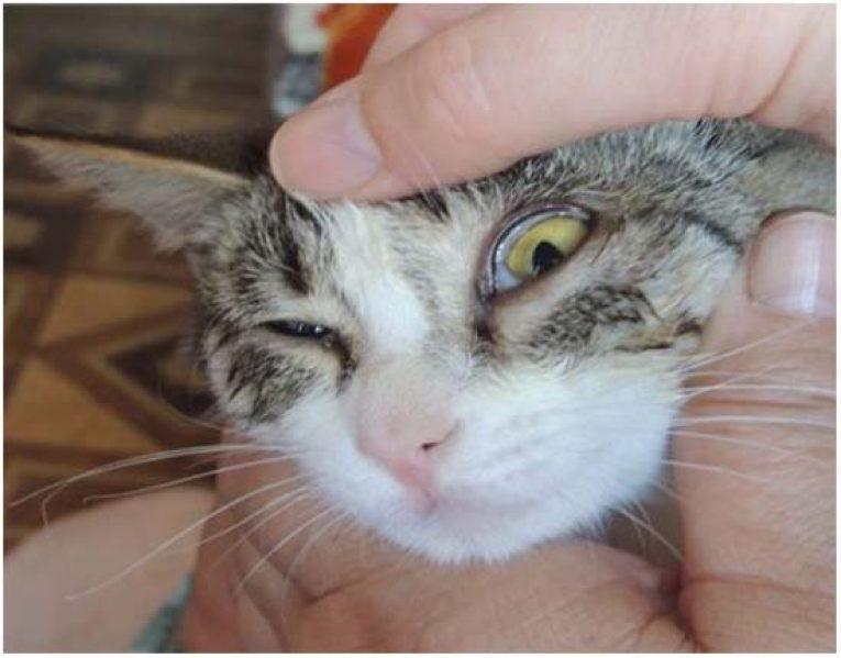 Как вылечить насморк кошке в домашних условиях? - «айболит плюс» - сеть ветеринарных клиник