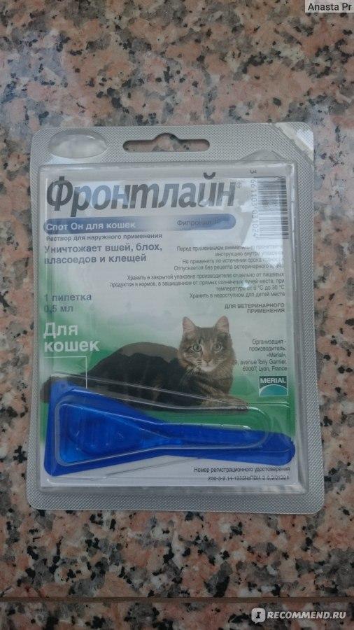 Обзор спреев от блох у кошки: состав, преимущества и недостатки, инструкция, цены, отзывы