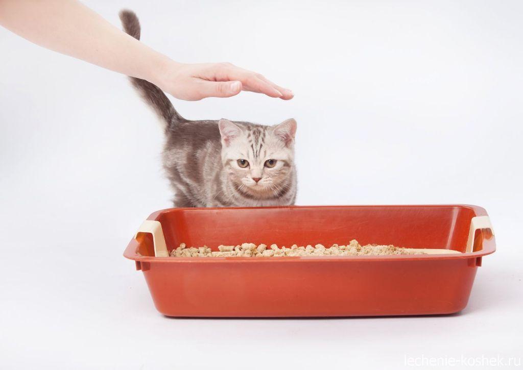 Как приучить котенка к туалету   хиллс