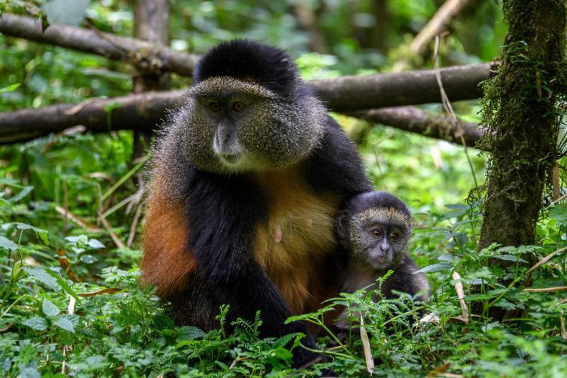 Африканский бородавочник: описание, фото, образ жизни в дикой природе : labuda.blog