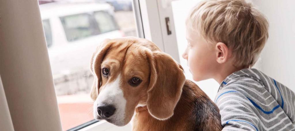 Самые добрые породы собак для детей – в квартиру или частный дом