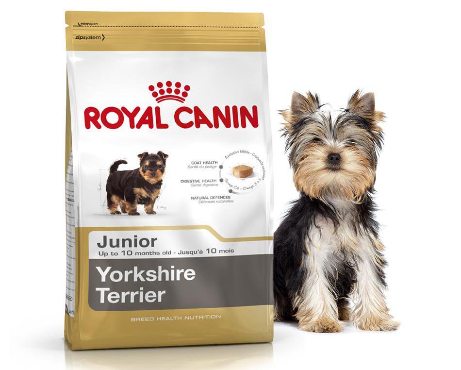Чем можно кормить йоркширского терьера, а чего давать собаке не следует?