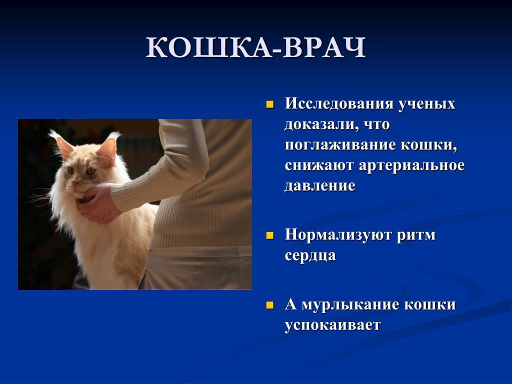 Внезапная агрессия у кошки на хозяина, что делать, чем вызвана и причины -petstory