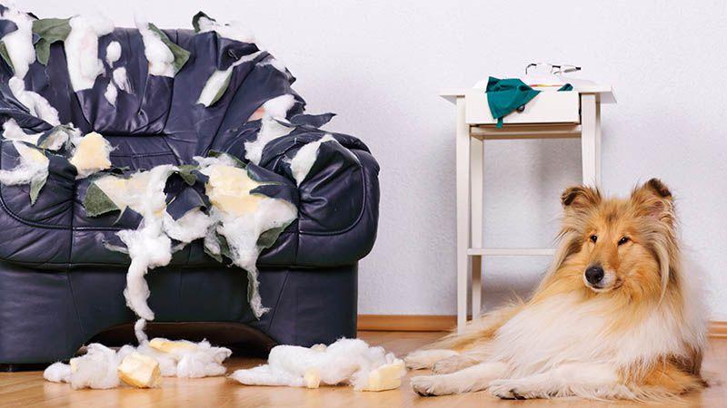 Что делают животные, когда остаются дома одни. ридус