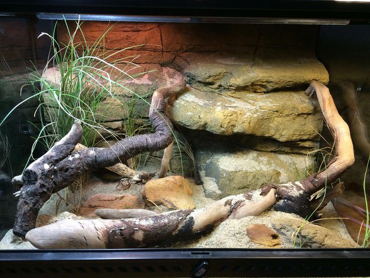 Домашние ящерицы: фото, виды, интересные факты, размеры, правила содержания и ухода
